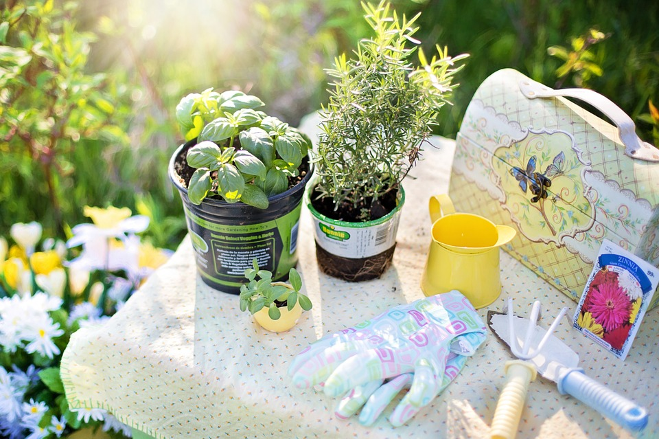 Tips for Seniors Gardening at Home